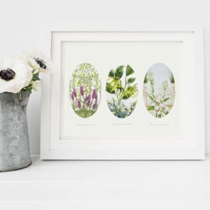 Amanda Jayne Prints