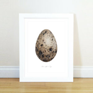 Sparrows Eggs Series